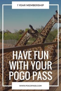 have-fun-with-pogo-pass